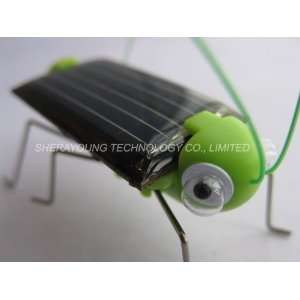frightened grasshopper solar powered bug Toys & Games